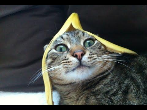 cute cat captions