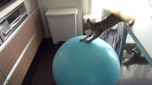 Clever kitten uses exercise ball to bridge the gap