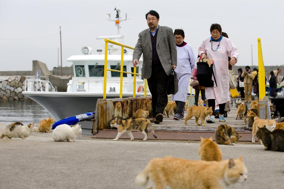 Cats surround people as they get off a boat at the harbour on Aoshima Island in Ehime prefecture in southern Japan