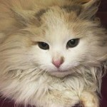 Cat Pulled from Icy River still Homeless One Month Later