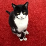 Man with cancer is reunited with missing cat