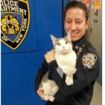 Cat turns himself in to NYPD