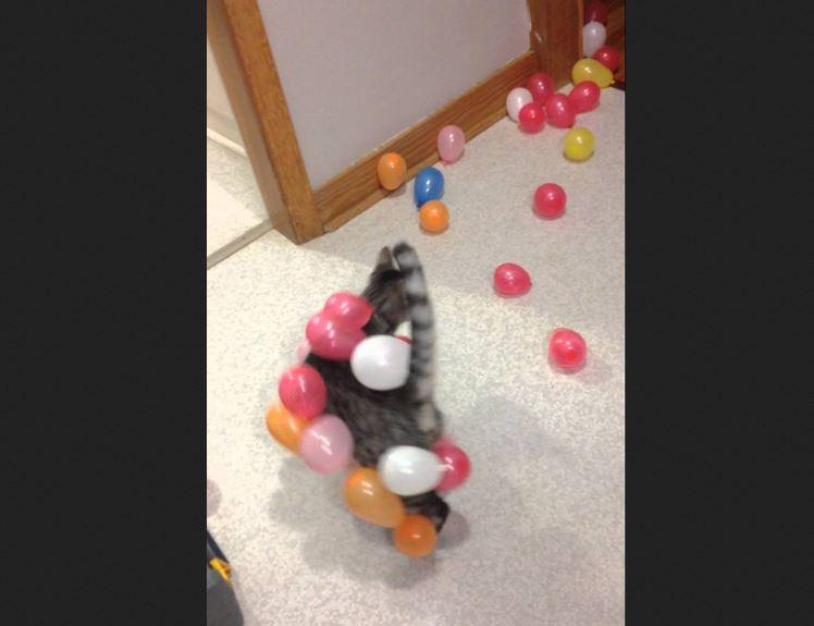 Static Balloon Cat