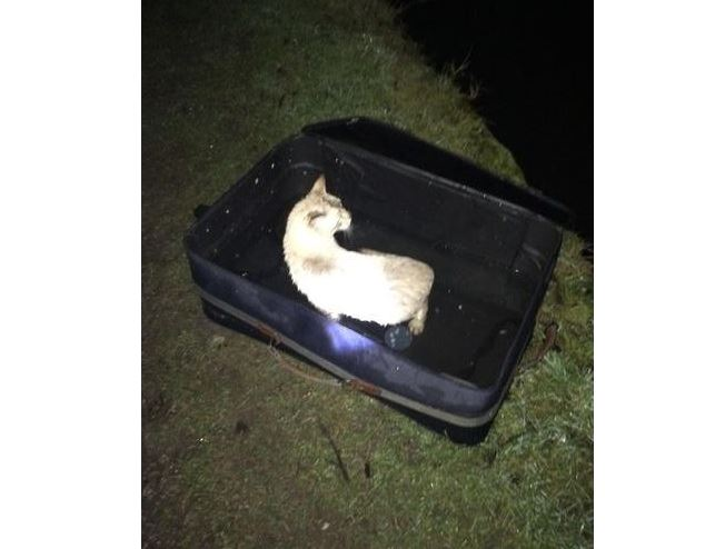 Weird case of the cat found floating in suitcase on a canal
