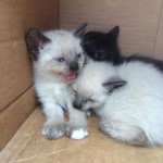 Florida sheriff's officers rescue abandoned kittens