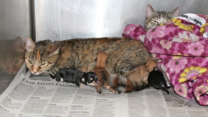 Cat plays surrogate mother to litter of abandoned pups