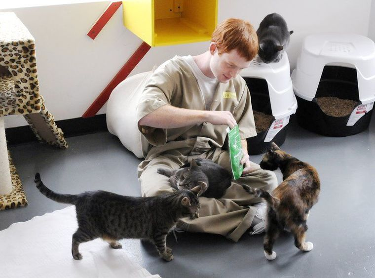 Prisoners and shelter cats benefit from prison program