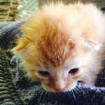 Recycling truck driver rescues 2nd kitten in a year