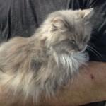 Demolition crew finds cat in Illinois tornado rubble