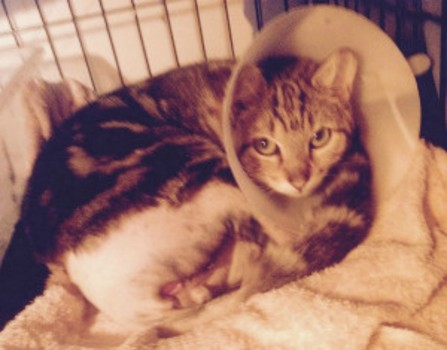 Over $12k reward offered in case of mutilated kittens as one recovers from injuries