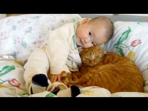 Cute cats cuddling and playing with babies