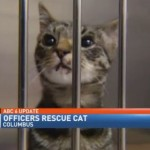 Update: More on kitten rescued by police from busy road