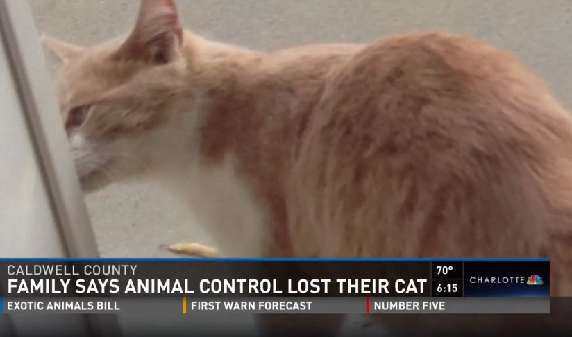 NC Family says animal control killed their cat
