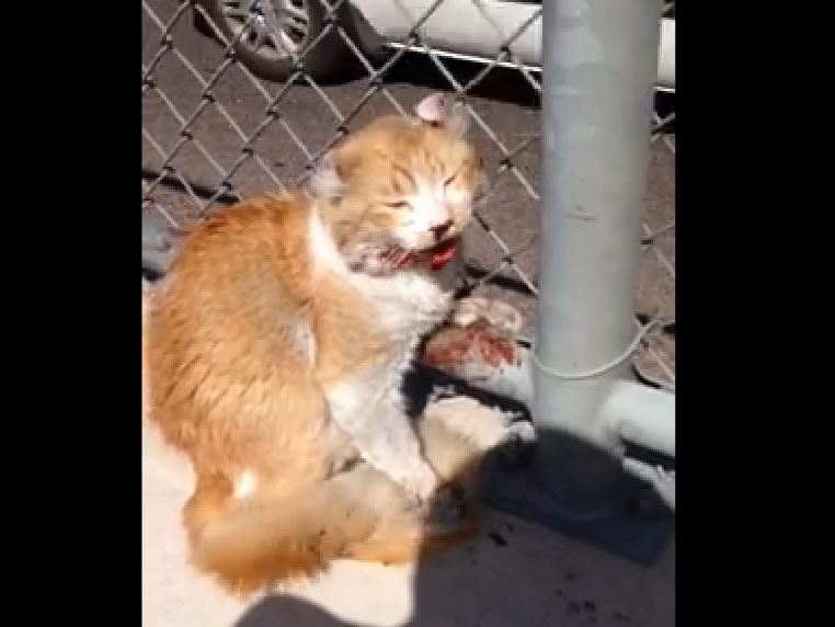 Good Samaritan rescues scared cat from busy freeway