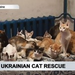 Refugee woman saves more than 40 cats from Ukrainian conflict zone