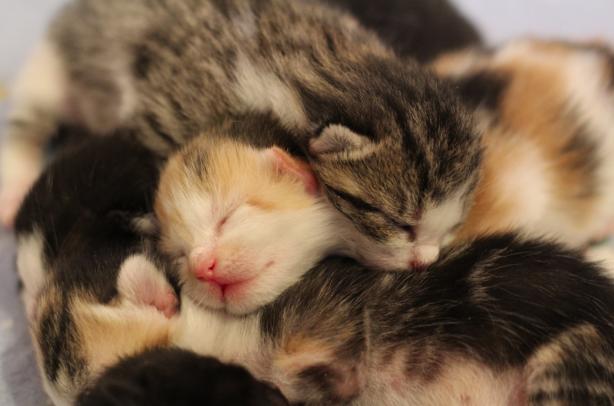 Cute Baby Cat Photos