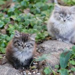 ALLEY CAT ALLIES' LIFESAVING SPRING KITTEN PROTECTION TIPS