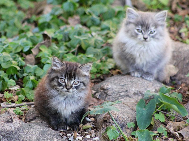 ALLEY CAT ALLIES' LIFESAVING SPRING KITTEN PROTECTION TIPS