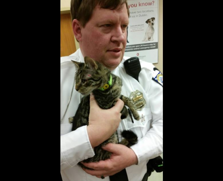 Police officers rescue kitten from traffic