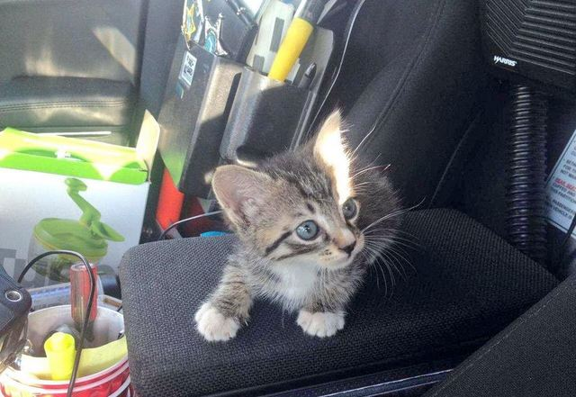 Adorable rescued kitten is featured in sheriff's department tweets