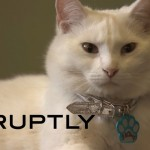 Cats and People cat cafe opens in Moscow