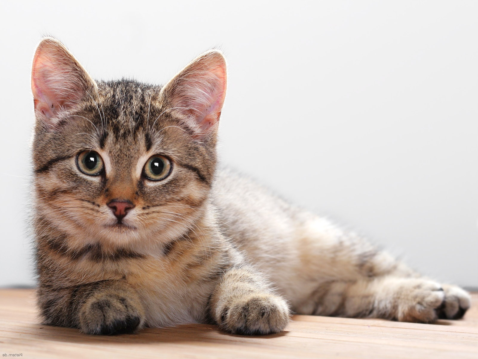 FDA Warns of Illnesses and Cats
