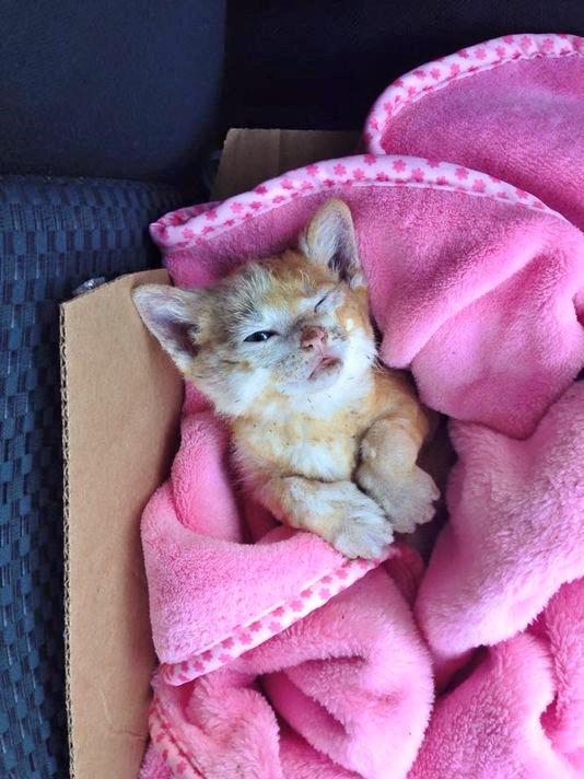 Catniss, kitten burned in brush fire