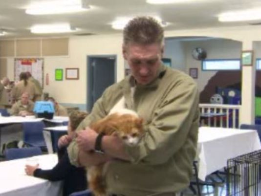Cats and prisoners program celebrates a successful four years