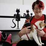 Cafe Purrfection: Sydney's different sort of cat cafe