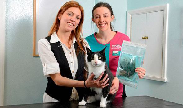 Garry the cat, with owner Ana Barbosa and PDSA vet Jess Maguire