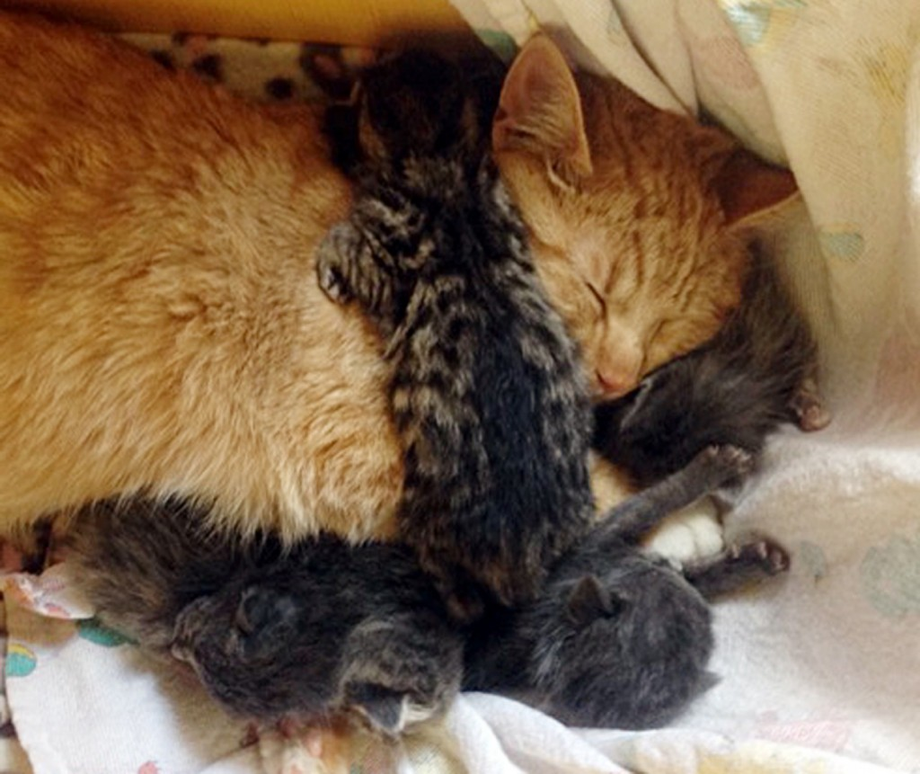Special needs male cat adopts abandoned kittens