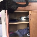 Cat shuts baby in the cupboard
