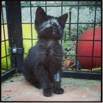 Odin and Lady J: Kittens in need get help and a second chance