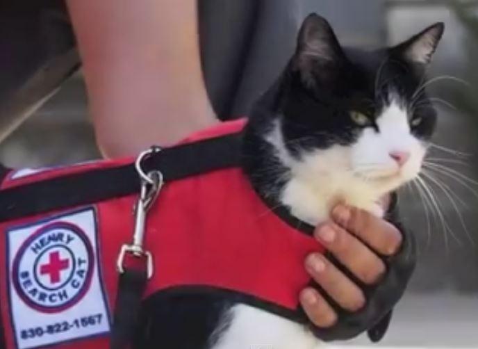 Search Cat finds lost kitten: Austin Lost Cat Found