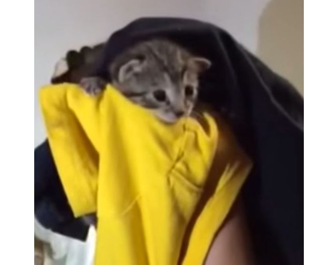 Couple tear up kitchen wall to rescue kitten