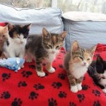 Future looks bright for 10 kittens found dumped in box