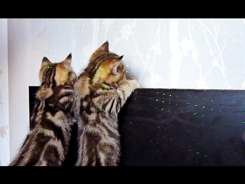 Kittens Laser show