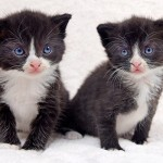 Tiny kittens saved from the bonfire by a whisker