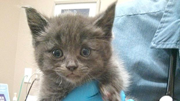 Ella: Tiny kitten found injured in dumpster gets help