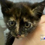Neighbors band together to rescue kitten