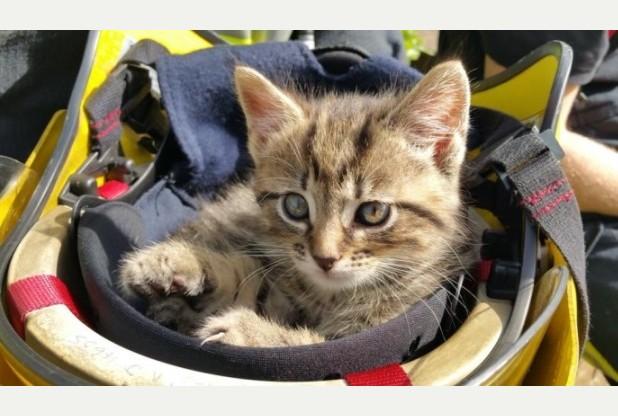 Kitten curls up in firefighter's helmet after rescue