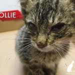 Desperate south Los Angeles kitten almost thrown in street to be killed – RESCUED