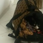 Lola the cat survives stowaway migrant journey from Africa to Italy