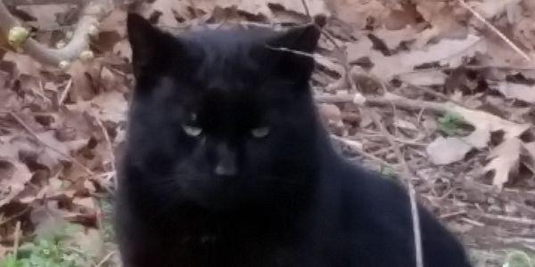 Hamilton, NJ colony cats issue makes the news