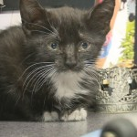 Kitten is rescued from Prius and finds a home