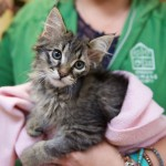 Shot, dumped kitten Lou C. is doing great after pellet is removed!