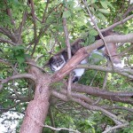 Firefighters rescue cop and cat stuck up tree