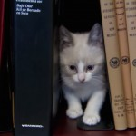 Kitten library allows office workers to check out adoptable kittens