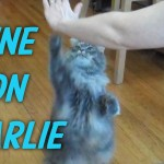 Charlie's Tricks