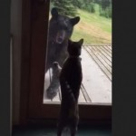 Cat scares bear off of her porch